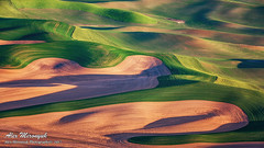 297A6067_1200 (Alex Mironyuk) Tags: 2017 abstract barn butte colfax landscape palouse phototour sunset tree washington waterfalls canola car field house panorama raps steptoe sunrise tractor wheat