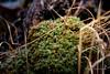 Lichen (Traylor Photography) Tags: alaska dof hike macro closeup winter lichen eaglerivernaturecenter anchorage unitedstates us