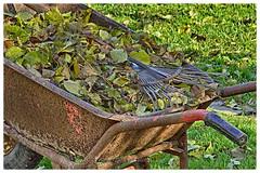 Automn is a second Spring...when every leaf is a flower... (@Katerina Log) Tags: autumn florafauna leaf rake wheelbarrow outdoor nature natura sonyilce6500 18105f4 katerinalog bokeh depthoffield