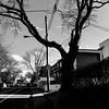 Avant, il avait plus de bras tendus vers le ciel... (woltarise) Tags: rosemont montréal arbre branches coupées électriques fils danger élagage