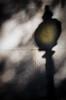 Light & Shadows (RansomedNBlood) Tags: street wv westvirginia film 35