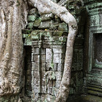 Ruins of Ta Prohm thumbnail
