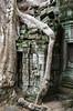 Ruins of Ta Prohm (Dan Denison) Tags: angkor cambodia ta prohm jungle tomb raider temple siem reap