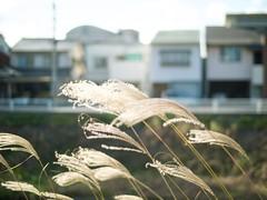 December Daylight (somazeon) Tags: voigtlander nokton 25mm f095 cosina panasonic lumix gx7 daylight town city tottori 鳥取 japan 日本