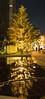 [Panorama] Illuminated Tree (gemapozo) Tags: illumination pentax tree night tokyo 645z panorama roppongi japan tokyomidtown 港区 東京都 日本 jp hdpentaxdfa645macro90mmf28edawsr パノラマ合成 東京ミッドタウン イルミネーション 夜景 反射