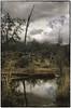 Sedona Tree (G. Christopher Klug) Tags: 1740mmf4 colorefex eos1 ektar northcoastlab sedona