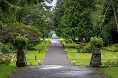 Ireland - Cong - Ashford Castle (Marcial Bernabeu) Tags: marcial bernabeu bernabéu ireland irlanda irish irlandes cong ashford castle castillo garden jardin