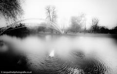 Mist on the River Ouse (drjacquebaxter) Tags: bedford bedfordshire mist blackandwhite river reflections bridge nature swan prideinbedford jacquelinebaxter jacquelinebphotografiecouk