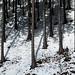 Linda floresta