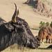 1706_mbe_mongolia_arrkhangai province_terhiyn tsagaan nuur np_094