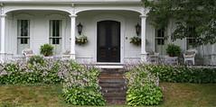 Hostas in bloom, Ellsworth, Maine (Spencer Means) Tags: door porch veranda front doorway entrance house steps hosta bloom flower lavendar wicker furniture white ellsworth hancockcounty maine me us usa downeast