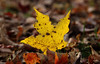 Yellow leaf (Millie (On and Off)) Tags: yellow leaf autumn low leaves fall outdoors tamron18400