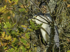 cachette (jpasserieux) Tags: leteich oiseau cache