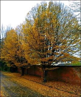 Fallen Leaves ...