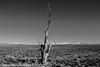 Owens Valley-116 (Denise Noelle Photography) Tags: owensriver bishopca sierranevadamountains monolake lonepine junelake mammothlakes