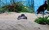 The Sleeping Beauty (ClemB14) Tags: aquarium monterey california willet blackoystercatcher sleeping shorebirds