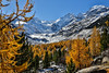 Morteratsch (Daniel.Peter) Tags: gletscher schnee schweiz switzerland dpe3x gelb glacier gold larch larches snow yellow