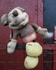 Oh Mickey! (the underlord) Tags: huaweip10 derelict mickeymouse bootle liverpool toy stuffedtoy merseyside skewered impaled disney weathered abandoned