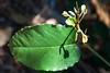 shadow on leaf (Leonard J Matthews) Tags: leaf shadow nature creation single environment australia mythoto redcliffe botanicalgardens queensland