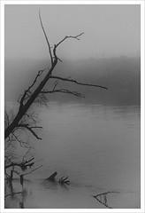 Profondo Nord (Outlaw Pete 65) Tags: paesaggi landscapes albero tree acqua water fiume river nebbia fog natura nature biancoenero blackandwhite nikond600 nikkor24120mm monticellidoglio lombardia italia