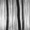Barcode (DavidFrutos) Tags: davidfrutosegea cieza murcia canondslr 5dmarkii canon70200mm winter invierno nature naturaleza landscape atmosphere ambiance paisaje fog foggy niebla chopos chopera poplars bosque forest water square bn bw monochrome monocromo greyscale fineart silverefexpro2