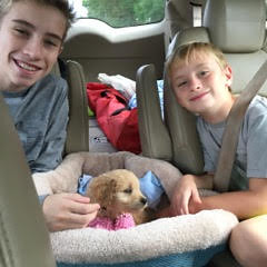 Liesel's Bowie on the way home with his new family!