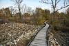Alla Riserva Naturale Speciale della Bessa (STE) Tags: la biella piemonte pietre sassi riserva naturale speciale della bessa ciotoli autunno autumn stones passerella vermogno