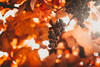IMG_7964 (Tsikura) Tags: autumn autumncolours sakartvelo nature canon landscape yellow orrange orange colours vine wine georgia კარალიოკი ჩირი 50mm