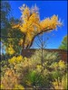 Colors of the Southwest.... (Sherrianne100) Tags: autumn cactus southwest colorful arizona