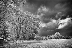 Winterland monochrom (Helmut Reichelt) Tags: bw sw winterland bäume felder schnee winter november schwaigwall geretsried bayern bavaria deutschland germany leica leicam typ240 captureone10 silverefexpro2 leicasummilux50mmf14asph