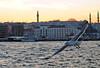Bosphorus (Engin Süzen) Tags: vağur boğaz boğaziçi bogazici bosphor bosphorus istanbul turkey türkiye bird birds seagull sea ship city galata deniz