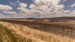 interaction between light and shadow (hjuengst) Tags: sun clouds field cornfield light shadow southafrica overberg bredasdorp westerncape südafrika