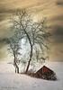 Winter Sun (Rita Eberle-Wessner) Tags: landscape landschaft winter snow schnee baum tree hütte sonne sun sky himmel hut barn odenwald twb