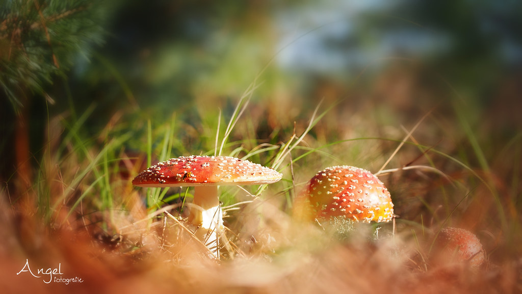 The World's Best Photos of mushrooms - Flickr Hive Mind