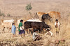 Kawardha - Chhattisgarh - India (wietsej) Tags: kawardha chhattisgarh india sony a700 sal70200g 70200 cows farming family