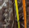 Crossblades (ashokboghani) Tags: nature greatmeadowswildliferefuge concord massachusetts fall blades