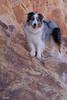 Aussie on the Rocks (Jasper's Human) Tags: aussie aus dog southmountainpark