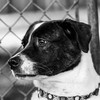 Bella04Nov201742-Edit.jpg (fredstrobel) Tags: dogs pawsatanta phototype atlanta blackandwhite usa animals ga pets places pawsdogs decatur georgia unitedstates us