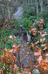 Satulah Falls-9995 (kasiahalka (Kasia Halka)) Tags: clearcreek color fall fallcolors forest highlands nantahalanationalforest nc nc28 northcarolina outdoors privateproperty roadview trail tree trees water waterfall waterfalls westernnorthcarolina wnc