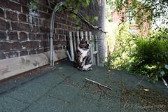 リエージュ ネコ (GenJapan1986) Tags: 2017 ネコ ベルギー リエージュ 動物 旅行 liège belgium travel fujifilmx70 animal cat