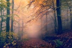 secret place (Rita Eberle-Wessner) Tags: forest wald bäume trees nebel fog waldweg forestpath blätter laub leaves äste zweige branches wood holz farn herbst autumn fall foggy neblig mysterious geheimnisvoll