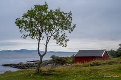 Ved Ladestien (Trondheim, Norway) (Tormod Dalen) Tags: smcpentax2835 norge trondheim