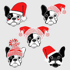 New Year's  French bulldog. Vector set of  dog's face in Santa's hat. Five hand-drawn isolated  elements on a gray background.  Dog - animal symbol of new year 2018. (everythingisfivedollar) Tags: frenchbulldog santaclaus hat holiday dog face drawing animal black white wrinkles doggy illustration funny puppy isolated pup bestfriend cute greetingcard humorous sketch canine purebred handdrawn vector set element object red outline contour asian celebrate tradition zodiac cartoon art decoration chinese card symbol calendar 2018 newyear santa mustache pug chihuahua