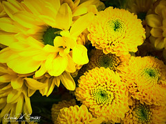 YELLOW ARRANGEMENT (CharlesSmithPhotography) Tags: 500px yellow flowers beauty spring nature flower floral beautiful natural happiness love warm bouquet blossoms blossom bloom blooming blooms arrangement