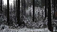 ♪ Walking In A Winter Wonderland ♪ (Daphne-8) Tags: snow schnee neige nieve neve trees arbres arboles bäume sneeuw bomen bos bosque wald woud forest forêt autumn herbst herfst ontoño atunno autumne winter invierno inverno hiver wood