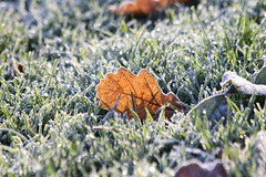 Cold morning (Attolrahc) Tags: canoneos60d canon eos 60d canonef70300mmf456isusm winter morning november nature closeup naturephotography naturecloseup