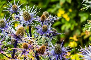 Ireland - Pollacapall Lough - Kylemore Abbey - Walled Garden