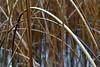The Arc (Terje Håheim (thaheim)) Tags: nature straws water arc nikon nikond500 d500 85mmf35gmicrovr
