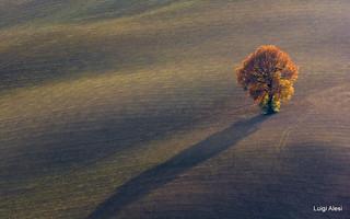 Marche countryside - solo con la sua ombra