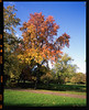 Fiery tree (Peter Bruijn) Tags: pen pentax pentax67 pentax6x7 velvia velvia50 analog analogue analogphotography analogfilm analogphoto film filmisnotdead filmphotography 120mm 120mmfilm 120mmphoto 120mmphotography 120mmanalog 120film 120photo 120photography 120analog fuji fujifilm fuji120 fujivelvia fujivelvia50 fujianalog slide slidefilm rotterdam fall autumn 55mm